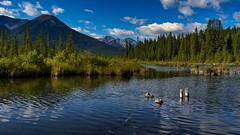 Vermilion Lakes (Sworldguy) Tags: vermilionlakes banff alberta canada water deadhead lake reflections natural woodland marsh landscape clouds sonya73 a7iii grass rockymountains sky