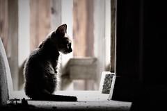 kitten (Sat Sue) Tags: olympus micro four thirds 43 penf japan fukuoka shrine stray cat