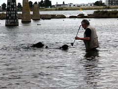 swimming the dogs 5 (andrevanb) Tags: amsterdam westerdoksdijk stenenhoofd dog dogs swimming