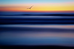 9/11/2001 We Will Never Forget (Christina's World : On & Off) Tags: seascape sandiego scenic sky sea seagull exotic icm landscape beach blue brightcolors intentionalcameramovement pacificocean impressionism minimalistic minimalism sunset flying