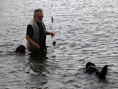 swimming the dogs 4 (andrevanb) Tags: amsterdam westerdoksdijk stenenhoofd dog dogs swimming