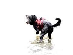 swimming the dogs 3 (andrevanb) Tags: amsterdam westerdoksdijk stenenhoofd dog dogs swimming