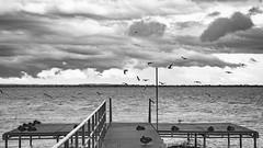 (zedspics) Tags: balaton balatongyörök bw blackwhite magyarország monochrome hungary hongarije ungarn plattensee pier nature storm zedspics 1909