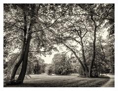 Babelsberg Palace Park in Potsdam (Germany) (werner.marx.kell) Tags: babelsbergpalacepark babelssbergpark babelsberg potsdam smartphone galaxys7 blackandwhite bw