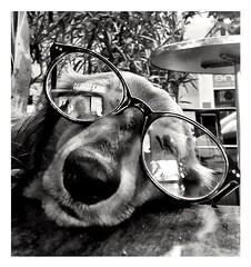 Josiane is resting . (streetspirit13) Tags: dog chien bw streetpassionaward blackandwhite bnwdemands streetphotographer blancoynegro marseillestreet funny psp