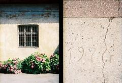 street. offside2017. uzhgorod. (Yaroslav F.) Tags: plants flower 1977 shadow day light concrete uzhgorod ужгород halfframe half frame dyptych diptych yaroslav futymskyi street photo crack художфонд cranny rive lettering 1970s film 35mm