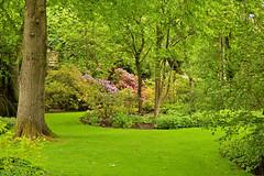 Edinburgh / Palace of Holyroodhouse / Royal Private Garden / A little paradise (Pantchoa) Tags: édimbourg ecosse royaumeuni jardin parc palace holyroodhouse royalprivategarden arbres fleurs gazon tronc allée nature vert paradis