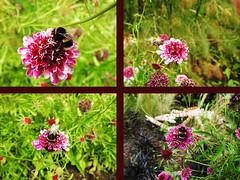 What's-the-Buzz (drhopf) Tags: scotland edinburgh edinburghzoo insect