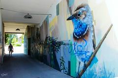Birdie (JuliSonne) Tags: streetart urbanekunst mauer wall graffiti colors scene urban pasteup stencil street karlsruhe wuam