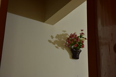 Story Of A Wall (Sheuli Hossain) Tags: light shadow style artificialflower