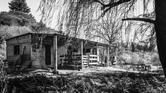 Barn (Est3ban.T) Tags: horse grayscale black white composition catamarca day sunshine nature tree wood wild nikon d3300 nikond3300 reflex dslr lightroom