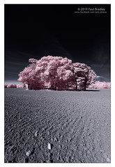 Ormesby Hall trees (ScudMonkey) Tags: copyrightc2019 paulbradley ormesbyhall trees ploughedfield falsecolour digitalinfrared converted canon 7d middlesbrough teesside efs1022mmf35 landscape magenta grey