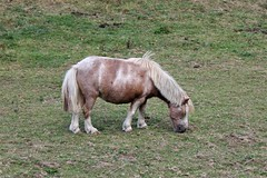 2114 COURT SUR PATTES MAIS PAS VITE (rustinejean) Tags: rustine animal nature poney pattes court vite