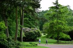Trees at West Park Wolverhampton (rowleyjohn77) Tags: wolverhampton west park trees greenery leafy nikon d3300 outdoors