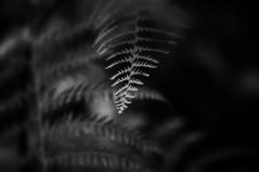 _untouchable (SpitMcGee) Tags: farn fern wald forest hmbt monochrom blackwhite schwarzweiss spitmcgee