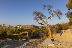 Filopappos Hill Athens 020919 N63A9171-a (Tony.Woof) Tags: filopappos hill athens acropolis