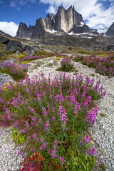 Fireweed in front of the Nalumasortoq - Tasermiut (Captures.ch) Tags: aufnahme capture berge fluss glacier gletscher gras himmel hill hügel landscape landschaft mountains rays river sky stein stone strahlen tal valley wasser water greenland tasermiut tasermiutfjord nanortalik southgreenland tasermiutkangerluat ketilsfjord nalumasortoq autumn fall foliage herbst clear clouds klar wolken tag evening abend day
