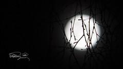 DSC00981-C (Quasimodo(Reduan)) Tags: kitlens moon sonydsc hx60 lowlight sony bestplacetoseeingermany europe deutschland germany munich bavaria regensburg placestoseeingermany topplacesineurope nightphotography astrophotography longexposure exposure wideangle zoom