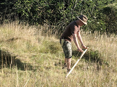Scything, Pebrieres (Niall Corbet) Tags: france occitanie languedoc aude scythe scything field faux pebrieres