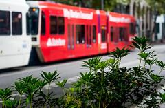 Lightrail Max 6th Ave (Orbmiser) Tags: nikonafpdx70300mmf4563gedvr d500 nikon oregon portland cityscape transportation trimet max lightrail bushes