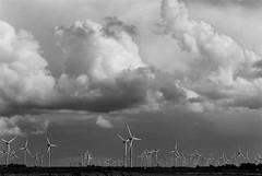 Clouds (unbunt.me) Tags: filmmeinfilmlabanalogwwwmeinfilmlabde film meinfilmlab analog wwwmeinfilmlabde eos3 nordfriesland blackwhite blackandwhite delta400 canon 35mm wolken ilford clouds
