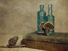 Still Life (DayBreak.Images) Tags: tabletop stilllife pinecones turkeytails fungus vintage antique books blue bottles canondslr canoneflens ringlight photoscape texture