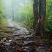 Follow the Fog