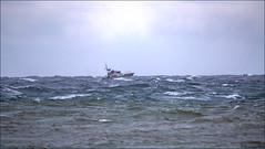 Coast Guard Cutter on Maneuvers (Steve Arena) Tags: racepoint racepointpoint hurricanedorian bird birds birding pelagic pelagicbirds provincetown barnstablecounty massachusetts nikon d750 2019 rpp