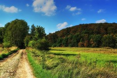 To the beech forest (Wojttek) Tags: beechforest puszczabukowa zachodniopomorskie poland