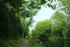 Canal walk (ekaterina alexander) Tags: chichester canal walk path tree trees england sussex autumn landscape ekaterina alexander photography pictures