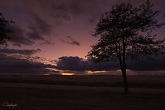 Cautivado...254/365 (cienfuegos84) Tags: sunset atardecer ocaso nubes cielo clouds sky arbol tree
