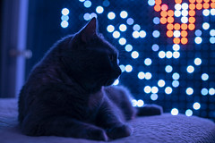 892A0914 (jackie.moonlight) Tags: christmas lights light pixel display cat shoes bokeh