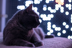 892A0912 (jackie.moonlight) Tags: christmas lights light pixel display cat shoes bokeh