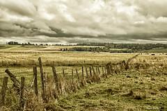 Paradis / Rural / Paridise (3-3) (Donald Plourde) Tags: paradis rural paridise champs fields clôture fence nuages clouds ferme farm sépia nb bw série