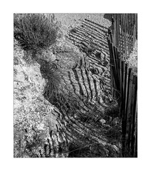 fence waves (Armin Fuchs) Tags: arminfuchs nomansland fence hff light shadow bush stripes 6x7 niftyfifty anonymousvisitor thomaslistl wolfiwolf jazzinbaggies grass