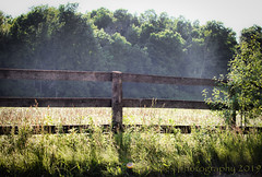 Beyond That Fence #1 (HFF) (13skies) Tags: road farmersfield country countrylife gravelroad rural hff fencefriday wood woodenfence trees field barrier private notrespass sunlight sun sonya99 happyfencefriday
