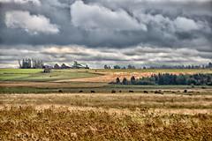 Paradis / Rural / Paridise (2-3) (Donald Plourde) Tags: paradis rural paridise champs fields clôture fence nuages clouds ferme farm vaches cows série