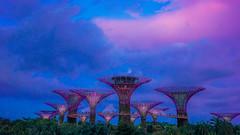 Supertree Grove | Singapore (Paul Tocatlian | Happy Planet) Tags: singapore happyplanet asiafavorites sunset