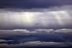 Leaving the nest (James_D_Images) Tags: storm stormclouds lightrays dark clouds sky alone lone seagull crescentbeach britishcolumbia layered