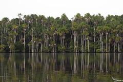 Sandoval lake (Kusi Seminario) Tags: arboles trees nature rainforest selva jungle madrededios tambopata sandoval lake lago outdoors canon eos 7dmarkii peru southamerica sudamerica amazonas amazon amazonia reflections reflejos