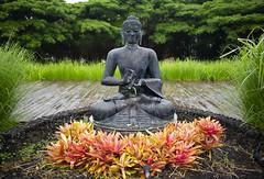 guru (intheclearkid) Tags: maui hi spiritual enlightenment leica 35mm m10 guru m240 summmicron