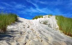 La Dune avant l'Océan (Ciceruacchio) Tags: dune duna sable sand sabbia ocean oceano atlanticcoast costaatlantica côteatlantique summer eté estate nouvelleaquitaine aquitania gironde gironda france francia frankreich