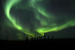 Alaska's Light Show (akclimber7) Tags: alaska tok northern lights aurora borealis canonphotography canon5dmkiv nightphotography auroraborealis amateurphotographer