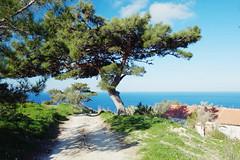 Ikaria (Vinzent M) Tags: zniv greece ελλάσ fuji xe1 fujinon 18 ikaria icaria ικαρία tree