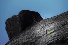 A plant on top of a mountain (Siuloon) Tags: plant top mountain górystołowe sudety kudowazdrój szczeliniecwielki roca kudowa zdrój góry stołowe szczeliniec wielki montains szczyt nature natura natur natureza naturaleza natural poland polska polonia pologne polen skała skały stone tree rocha montañasdelamesa tablemountains montagnesdelatable stolovéhory テーブルマウンテン tafelberge