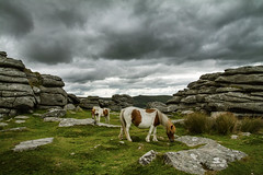 Pew Tor Ponies (Christian Hacker) Tags: pewtor dartmoor ponies grazing overcast foreboding dramatic darkclouds graniteoutcrops geology granite lichen grass landscape nature outdoors walk hike nationalpark canoneos50d tamron1750mm uk animals animalencounter dartmoorponies wildponies