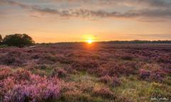 HDR Zuiderheide5 (frits29) Tags: landscape heather zuiderheide landschapsfoto zonsondergang sunset dutchlandscape
