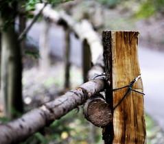 _tied down (SpitMcGee) Tags: hff happyfencefriday zaun fence holz wood tieddown angebunden spitmcgee