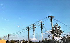 2019 255/365 9/12/2019 THURSDAY - Flight based owner's of four chambered hearts congregating on elevated conductors. (_BuBBy_) Tags: 2019 255365 9122019 thursday flight based owner's four chambered hearts congregating elevated conductor conductors birds wire bird 255 9 12 365 365days project project365 thorsday thor god of thunder thurs thur thr th r september evening flock power line lines electrical known aves or avian dinosaurs group endothermic vertebrates characterised by feathers toothless beaked jaws laying hardshelled eggs high metabolic rate fourchambered heart strong yet lightweight skeleton congregation
