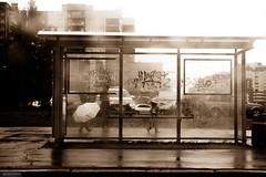 Let it rain! (Listenwave Photography) Tags: street trip travel people baby rain umbrella peace journey fv10 merrill foveon listenwave light busstop family